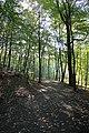 Herbstlicher Wald - panoramio.jpg
