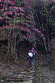 Hiking further up into the rhododendron forest (4525285335).jpg
