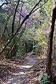 Himukai Daijingu 2009-04-08 (3530079530).jpg