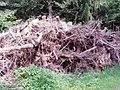 Holzhaufen am Waldrand - geo.hlipp.de - 36071.jpg