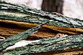 Holzstrukturen 1 von 1 passig gemacht.jpg