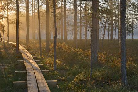 Sunrise at Viru bog
