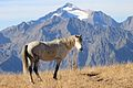 Horse in the Mountains.JPG
