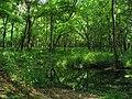 Ichetucknee Springs State Park Forest.jpg