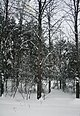 Icy forest near Gniezno, Poland3.jpg