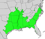 Ilex decidua map.png