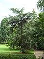 Im Farwickpark - panoramio (2).jpg