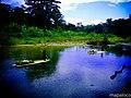 Indígenas Mayagnas, transportando racimos de bananas en balsas de guano, en el rio Bambana. - panoramio.jpg