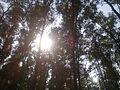 Inner of Bangabandhu Sheikh Mujib Safari Park by Ikhtamin.jpg