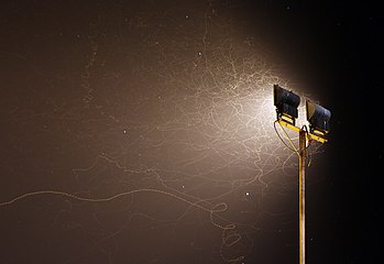 Insect flights in the night in front of a spotlight HP L7869.jpg