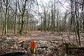 Into Black Wood - geograph.org.uk - 1772470.jpg
