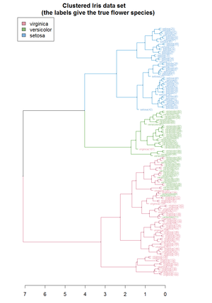 Hierarchical clustering - Image: Iris dendrogram