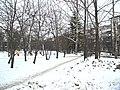 Irkutsk's Akademgorodok - panoramio (1).jpg