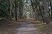 IslaGorriti-bosque.jpg