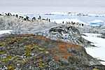 Islas Yalour 4, líquenes.jpg