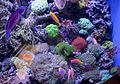 J20161104-0039—Fish among Corals—Monterey Bay Aquarium (22744894888).jpg