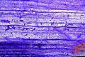 JadéiteItalieVal d'Aoste Don. Saussol Jadeite MuséumHistoireNaturelleLilleGLAM2016a4.jpg