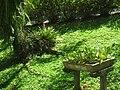 Jardim Botânico de São Paulo - general view IMG 0196.jpg