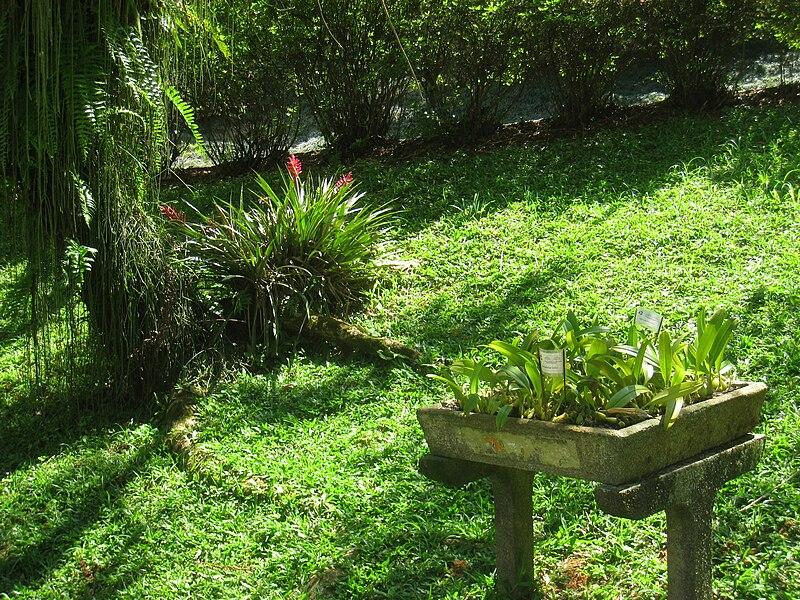 File:Jardim Botânico de São Paulo - general view IMG 0196.jpg
