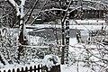 Jardin naturel (Paris) sous la neige 22.jpg