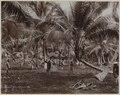KITLV - 53176 - Lambert & Co., G.R. - Singapore - Plantation of coconut palms in Singapore - circa 1895.tif