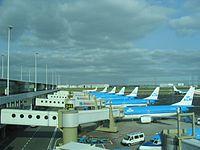 KLM B737s at Schiphol.jpg