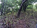 Karnala Bird Sanctuary Maharastra 4.jpg