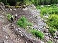 Kautz Creek - Flickr - brewbooks (1).jpg