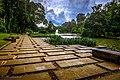 Kebun Raya Bogor 06.jpg