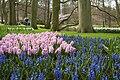 Keukenhof, The Netherlands (5586099950).jpg