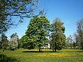 Kevadekuul Uuemõisa mõisapragis, Läänemaal.JPG