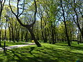 Kevadine Kalamaja kalmistupark.JPG