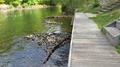 Kiekebuscher Wehr, Cottbus (downstream canoe pier).png