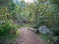 Kirstenbosch National Botanical Garden, Cape Town (P1060067).jpg