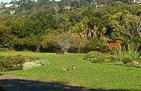 Kirstenbosch National Botanical Garden by ArmAg (19).jpg