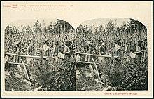 220px-Knackstedt_%26_N%C3%A4ther_Stereoskopie_0669_Cuba._Zuckerrohr-Plantage._Bildseite_mit_Ansicht_um_1900_arbeitender_Sklaven_im_Feld_auf_Kuba.jpg