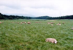 Koiwai-farm.jpg