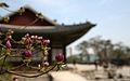 Korea Palace Spring Flowers 06.jpg