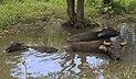 Kudat Sabah Kg-Loro-Kecil-03a.jpg
