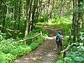Kunersdorfer Forst - Wanderweg (Footpath) - geo.hlipp.de - 39333.jpg