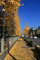Kyoto, Japan -leaves in Autumn-30Nov2007.jpg