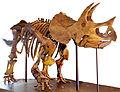 LA-Triceratops mount-1.jpg