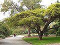 LA County Arboretum - road.jpg