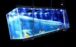 (Le) Poisson Rouge - The hanging fishtank in the vestibule of (Le) Poisson Rouge.