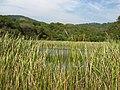 Lago - panoramio (12).jpg