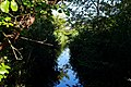 Lago di Massaciuccoli - fitta vegetazione.jpg