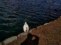 Lake Eola (30254176542).jpg