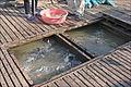 Le village flottant des pisciculteurs (Chau Doc, Vietnam) (6620584989).jpg