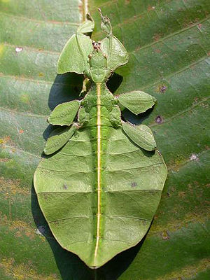 Image of Entomology: http://dbpedia.org/resource/Entomology