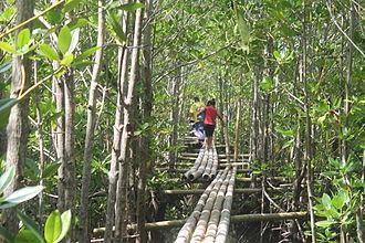 Lebak, Sultan Kudarat - The Mangrove forest in wetlands of Lebak, Sultan Kudarat
